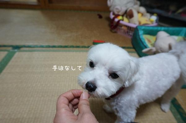DSC06186.jpg