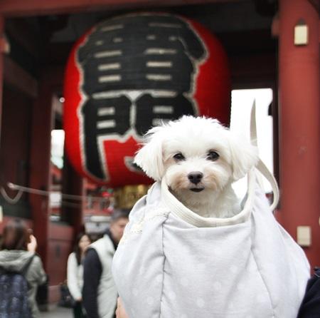 かみなり-2