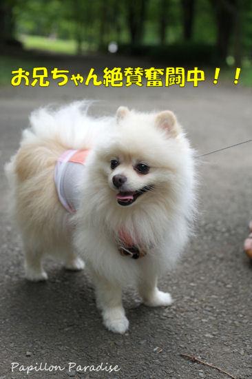 2012071510.jpg