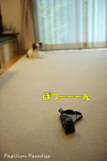 2012081113.jpg