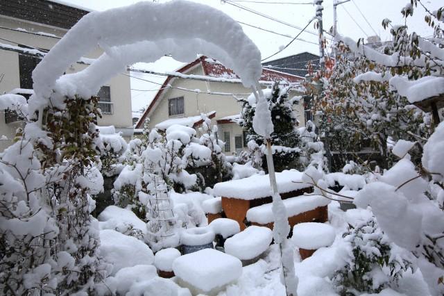 YOSI8746.jpg