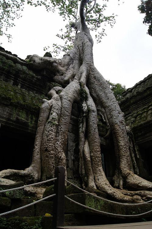 カンボジア27
