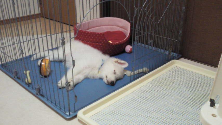 ★よく寝る★