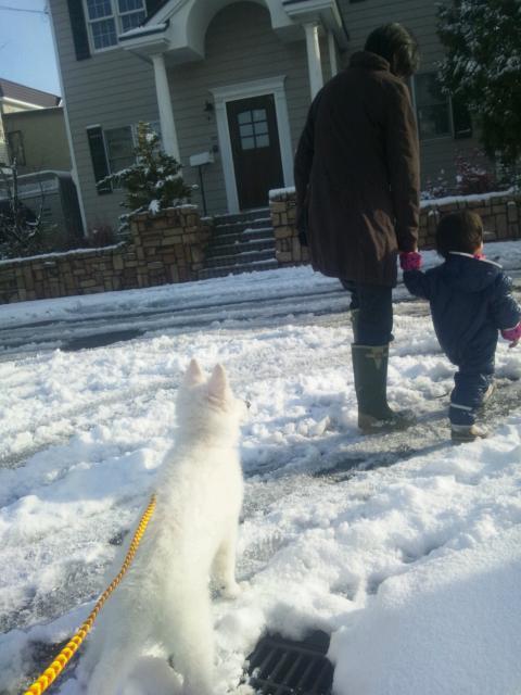 雪の中をさっそくお散歩