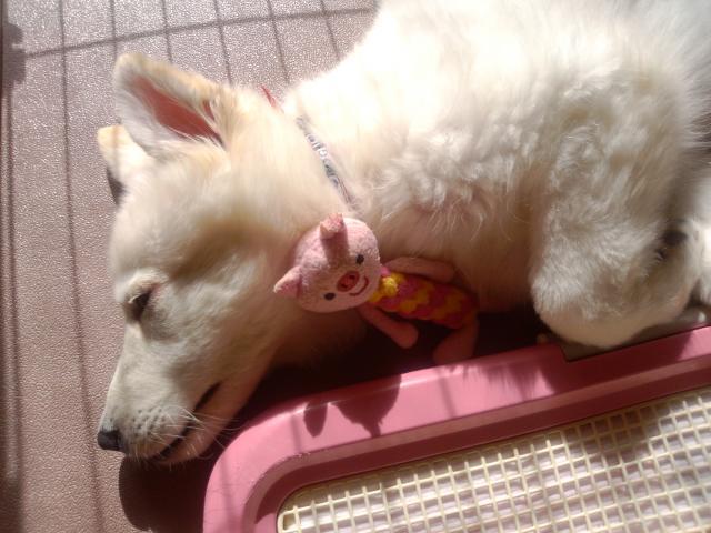 おもちゃを抱きしめて眠る★ラン★