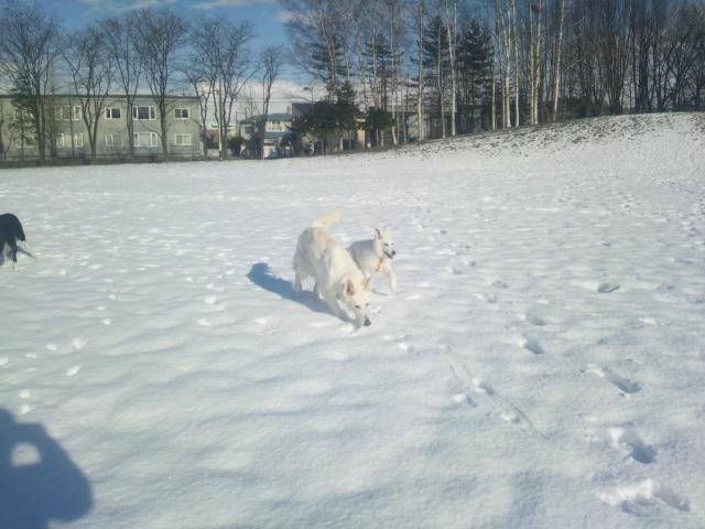雪の中ルンルンの★カエデ★