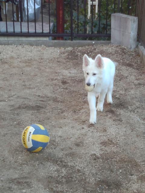 ★ラン★のボール好き