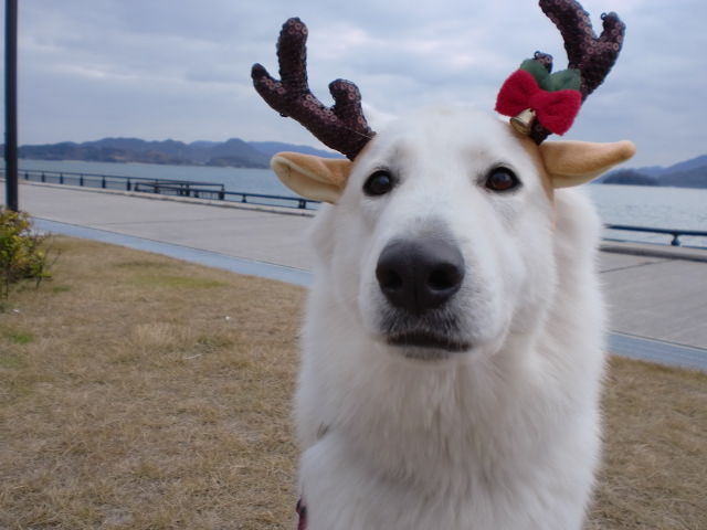 MerryChristmas★リサ★2011年バージョン