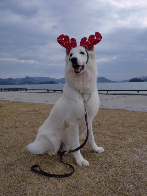MerryChristmas★アブー★2011年バージョン
