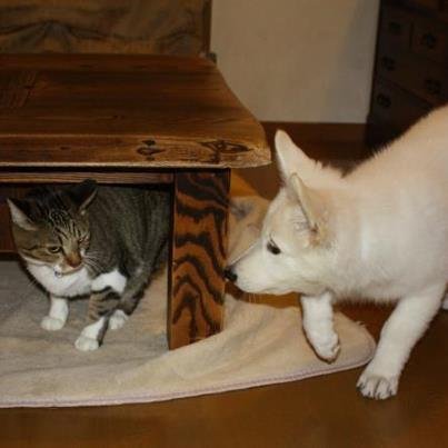 猫のぴーすけが大好きらしい