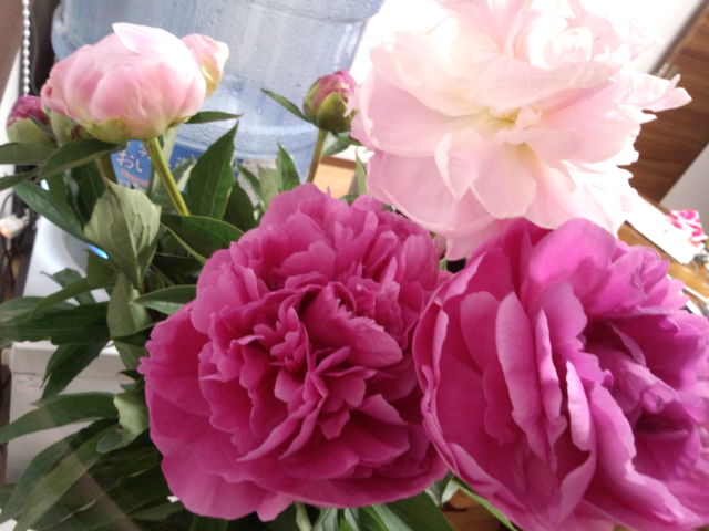 芍薬のお花