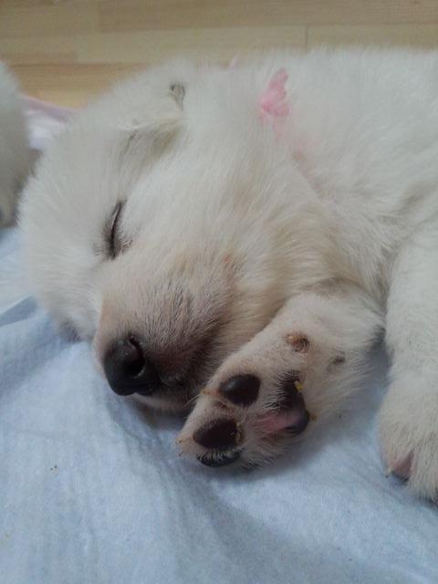 寝顔は天使
