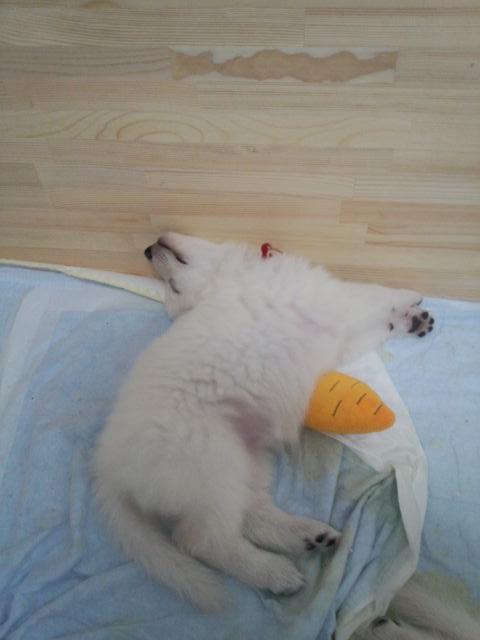 寝てる・・・