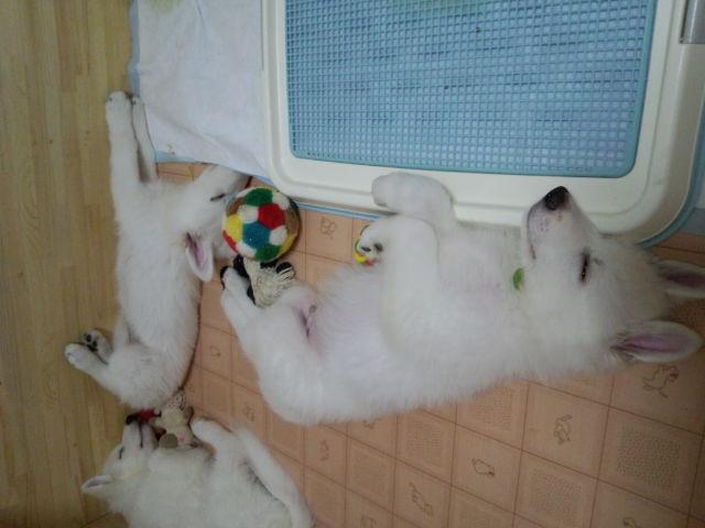 ★ルーア★(奥)と★ランスロット★(手前)の寝姿