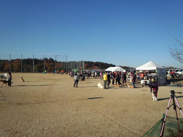 秋晴れの中のJKC競技会