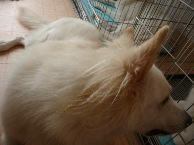 耳毛はヒヨヒヨの毛なのね