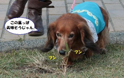 IMG_4024_20121027014608.jpg