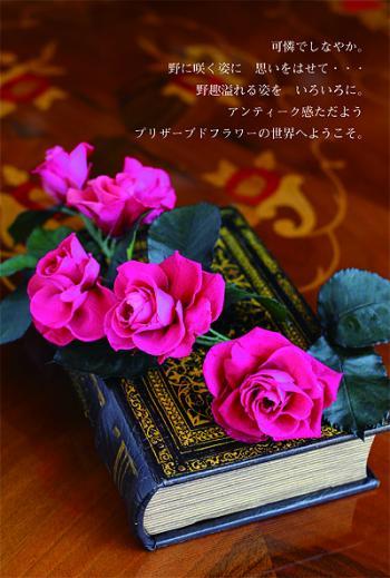 繝上ぎ繧ュ_convert_20120814203953