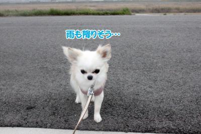 10_convert_20130321131049.jpg