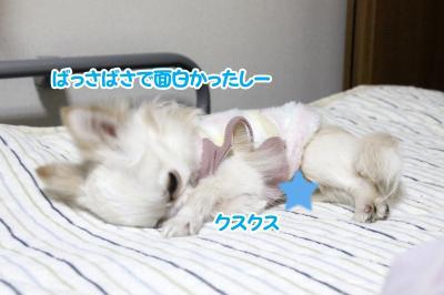 14_convert_20130321131133.jpg