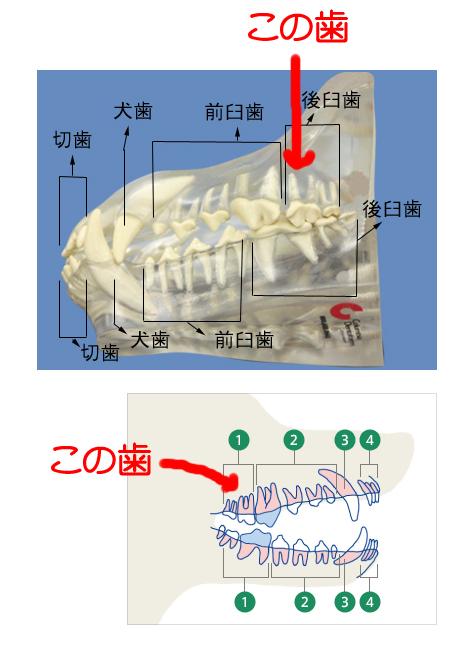 20128276.jpg