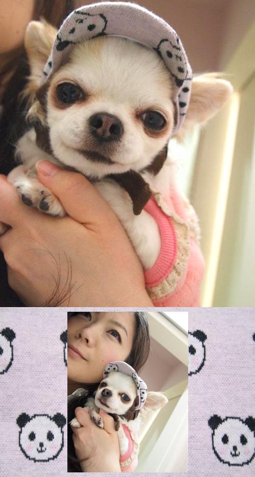 pandacap2.jpg