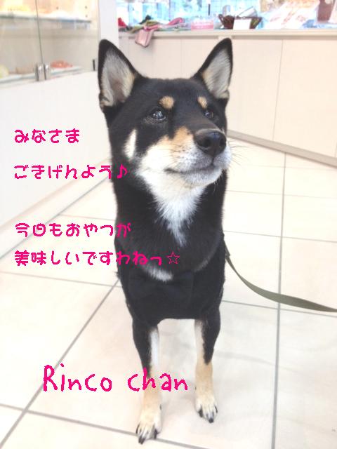 rinco5.jpg