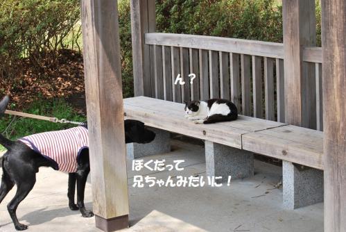 2012417DSC_2549.jpg