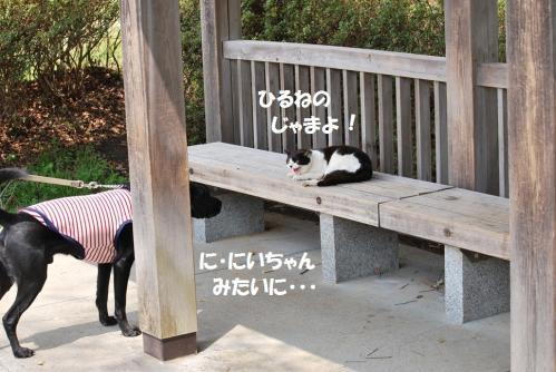 2012417DSC_2550.jpg