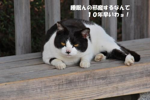 2012417DSC_2551.jpg