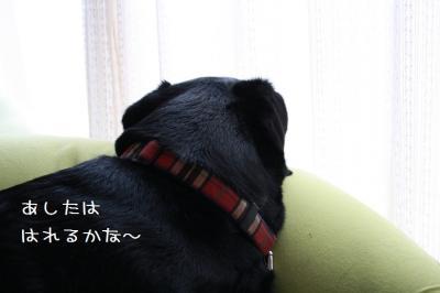 IMG_4049_20120427213745.jpg