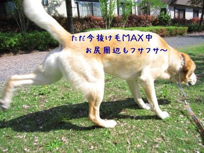 IMG_4765_20120506214721.jpg