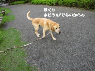 IMG_4888_20120518184642.jpg
