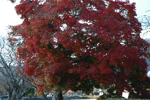 広沢の紅葉