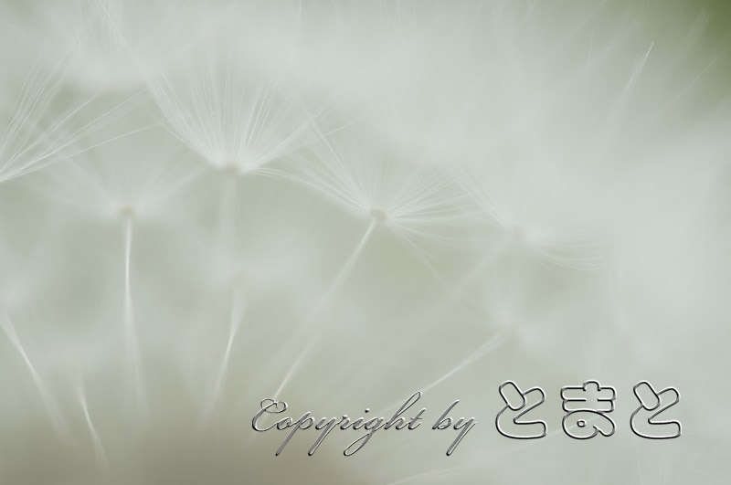 _DSC9306.jpg