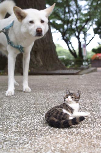 PICT0535danchan.jpg