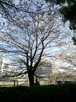 広島市 太田川桜