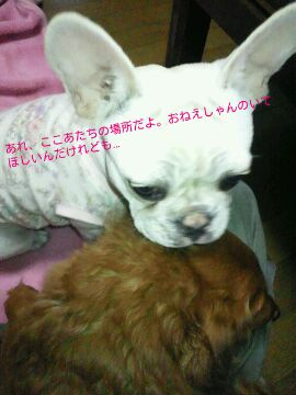 IMG_2012111433705.jpg