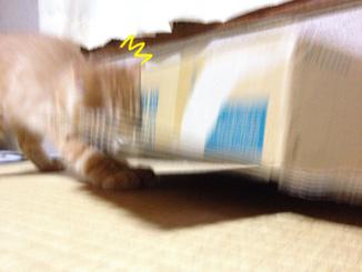 hako---12.jpg