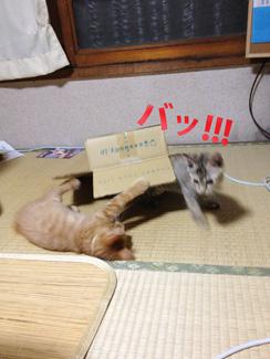 urayama---03.jpg