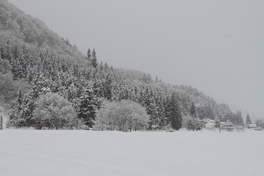 20130101-05.jpg