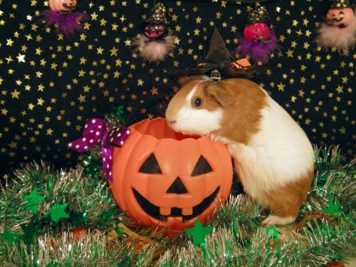 かぼちゃしゃんに