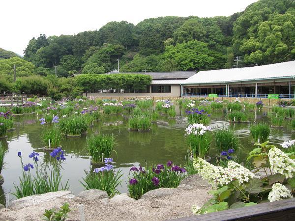 菖蒲池 1