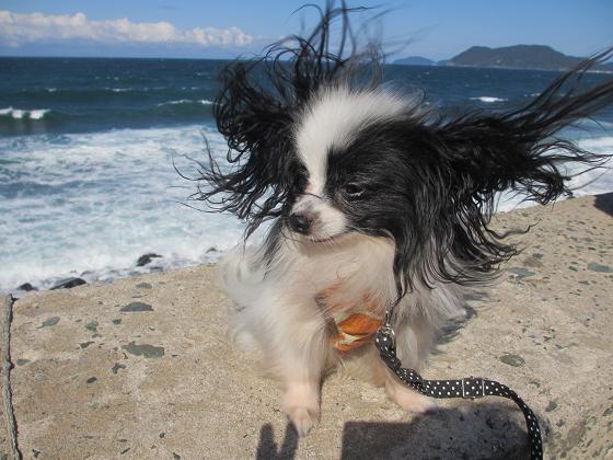 波とランディ