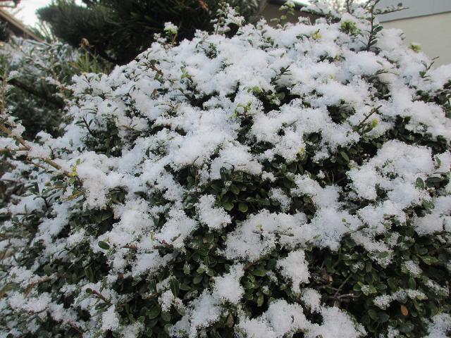 2013雪