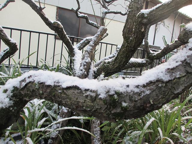 2013雪1