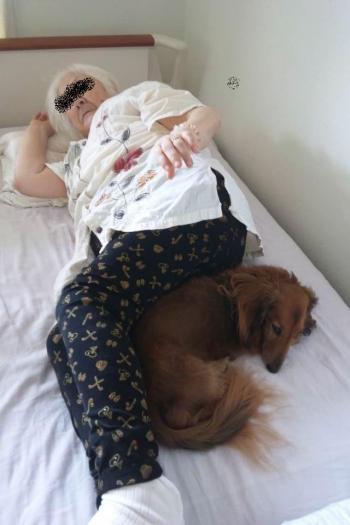 介護犬ブーフ