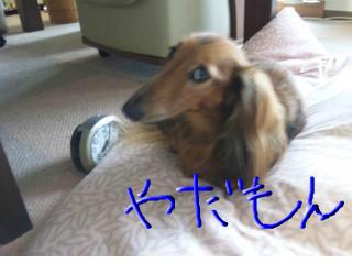 snap_minminbufu_201292211621.jpg