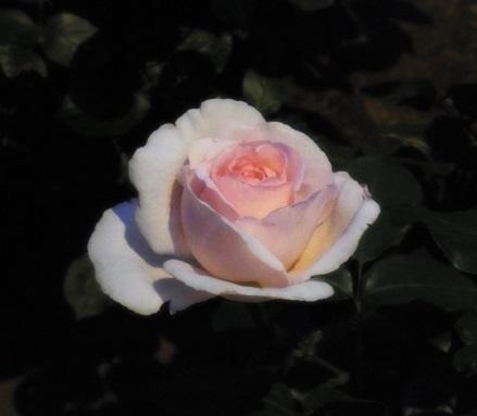 アンドレ ル ノートル②