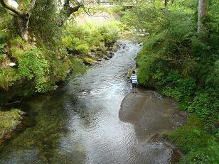 田倉川で釣り